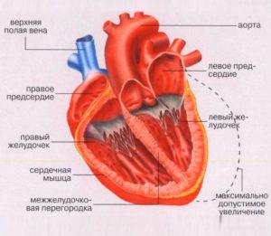 Болит сердечная мышца фото