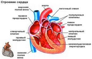влияние Анальгина на сердце фото