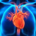 Давит сердечная мышца