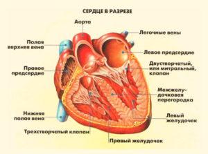 Симптомы невроза сердца фото